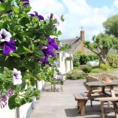 A37 dog-friendly pub and walk near Yeovil, Somerset - Driving with Dogs