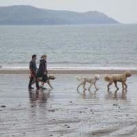 Freshwater East dog-friendly beach Pembrokeshire, Wales - Dog walks in Wales