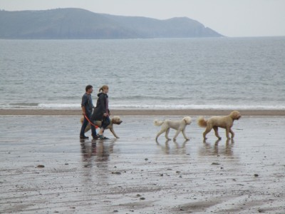 Freshwater East dog-friendly beach Pembrokeshire, Wales - Driving with Dogs
