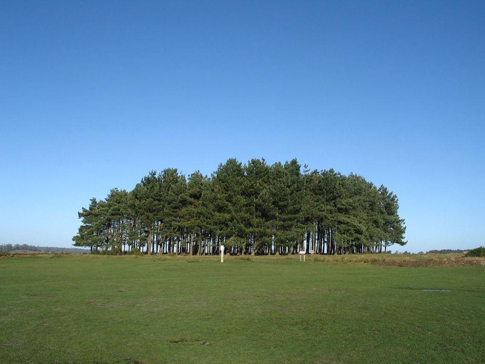 A22 iconic dog walk near Uckfield, East Sussex - Sussex dog walk