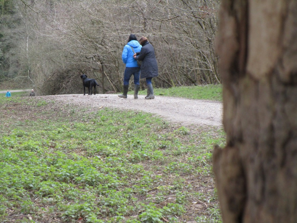 A21 Great Wood dog walks, East Sussex - Dog-friendly pubs with dog walks East Sussex.JPG