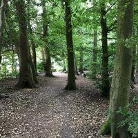 A404 local walk Chorleywood, Hertfordshire - Chorleywood dog walk 2.jpg
