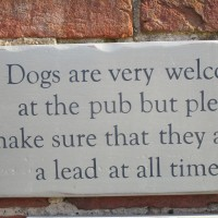 A25 dog-friendly pub and dog walks near Guildford, Surrey - Surrey dog-friendly pub and dog walk.JPG