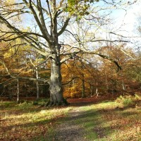 Great Wood dog walk, Hertfordshire - Dog walks in Hertfordshire