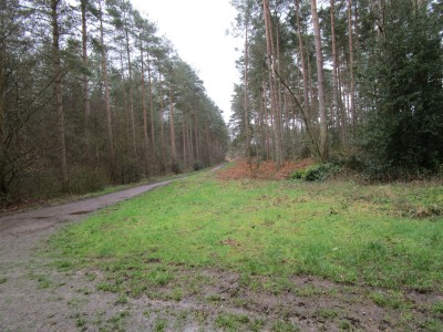 Woodland dog walk near Farnham, Surrey - Driving with Dogs