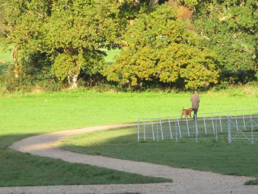 A35 Country Park dog walk with dog wash, Dorset - IMG_0254.JPG