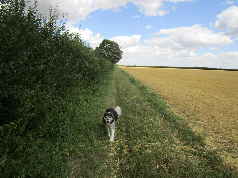 Brafield dog walk and dog-friendly pub, Northamptonshire - Northamptonshire dog walk and dog-friendly pub