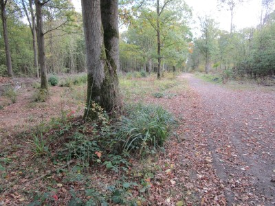 Pluckley pub with a woodland dog walk, Kent - Driving with Dogs