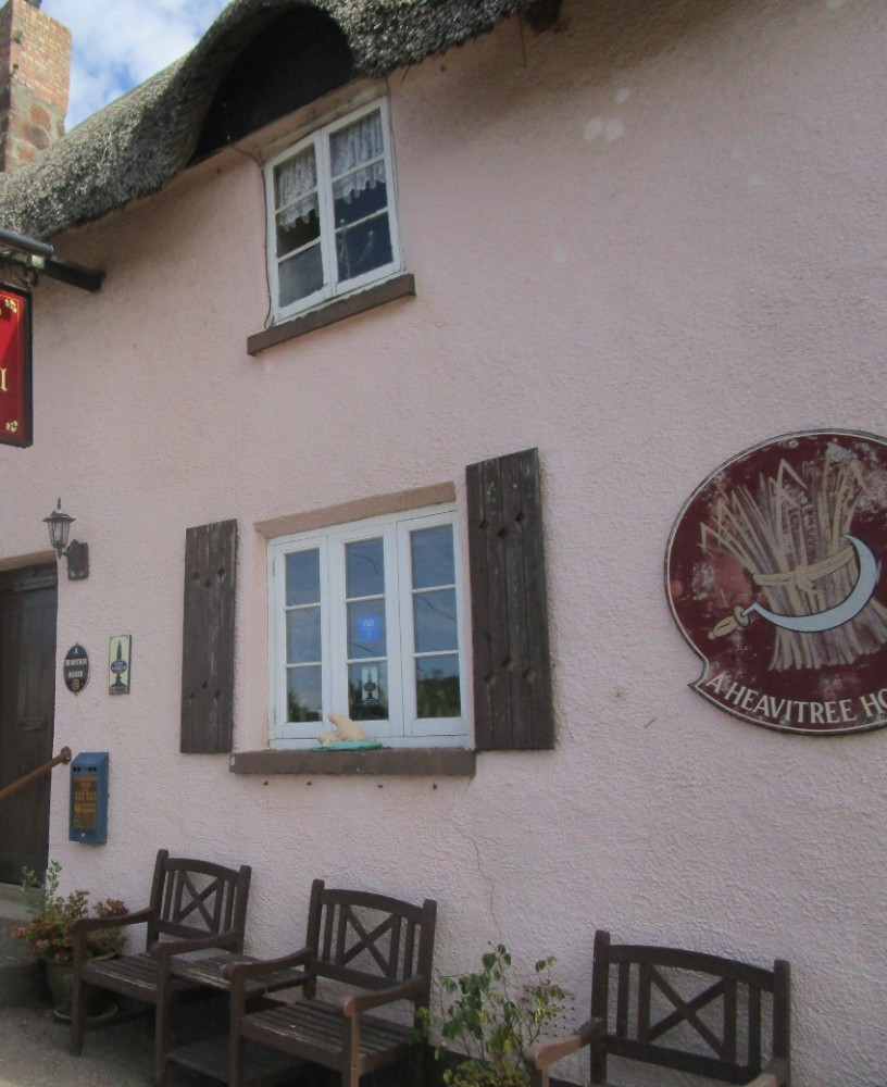 A380 country pub and easy dog walk, Devon - Devon dog walk and dog-friendly pub.JPG
