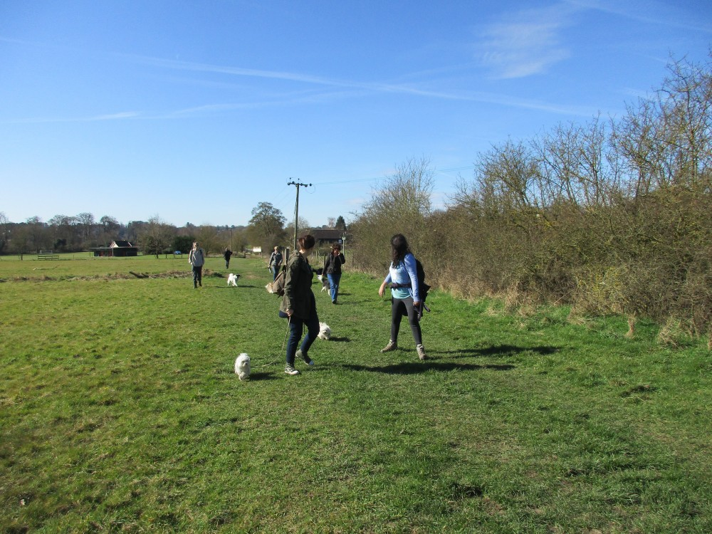 Berkhamsted dog walks, Hertfordshire - Dog walks in Hertfordshire