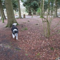 A325 Woodland dog walk near Farnham, Hampshire - Hampshire dog walks.JPG