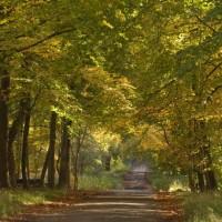Savernake Estate dog walks, Wiltshire - Wiltshire dog walk