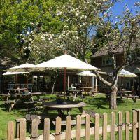Friendly village pub with large garden on the Burnham Road, Norfolk - Dog-friendly pub and dog walk near Hunstanton