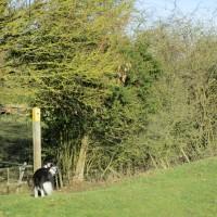 Dog-friendly village pub and dog walk, Warwickshire - Warwickshire dog-friendly pub and dog walk.JPG
