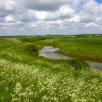 Stunning marshland dog walk and dog-friendly pub nearby, Essex - Essex marshes dog walk.jpg