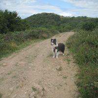 Best dog walk over the Malverns, Worcestershire - IMG_2251.JPG