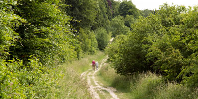 A3 dog walk near Horndean, Hampshire - Driving with Dogs