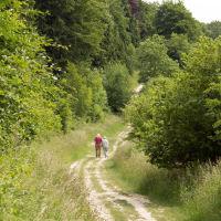 A3 dog walk near Horndean, Hampshire - Hampshire dog walk