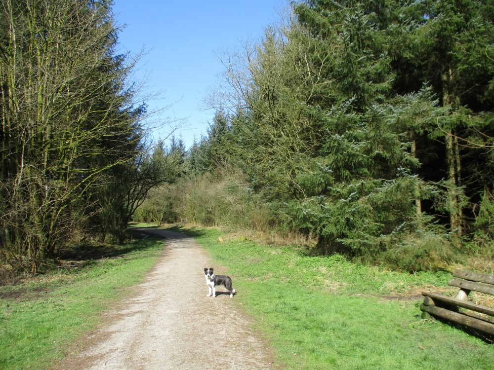 Woodland dog walk and history, Somerset - Dog walks in Somerset.JPG