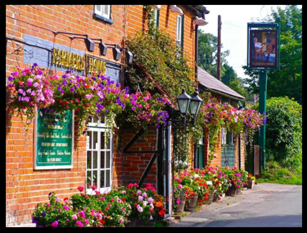 Rural dog walk and dog-friendly pub near Botley, Hampshire - Hampshire dog-friendly pub and dog walk
