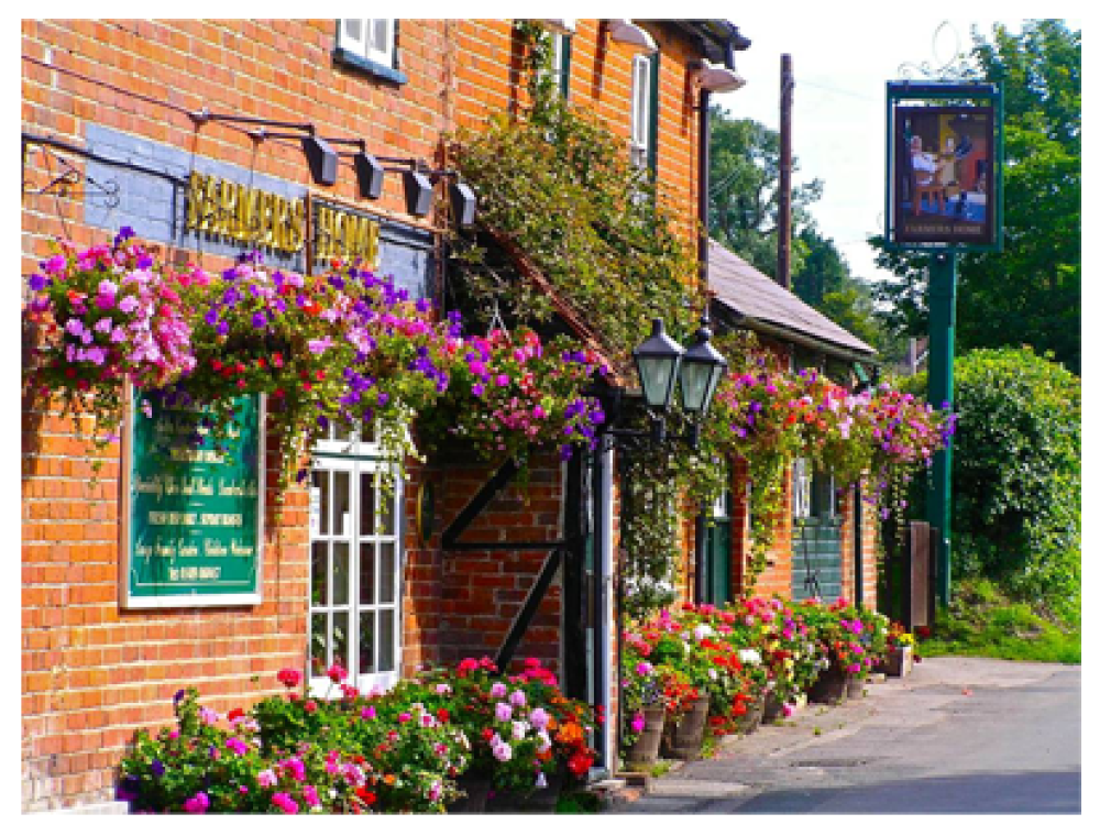 Rural dog walk and dog-friendly pub near Botley, Hampshire - Hampshire dog-friendly pub and dog walk