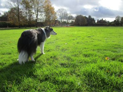 M4 dog friendly pub and dog walk near Pangbourne, Berkshire - Driving with Dogs