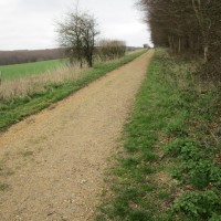 Quiet forest dog walk in the South Downs, West Sussex - Sussex dog walks with dog-friendly pub.JPG