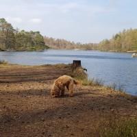 High Dam dog walk, Cumbria - 20190415_162430.jpg