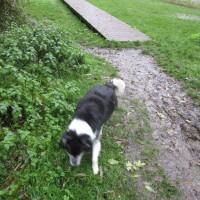 A429 lakeside dog walk near Cirencester, Gloucestershire - IMG_6113.JPG